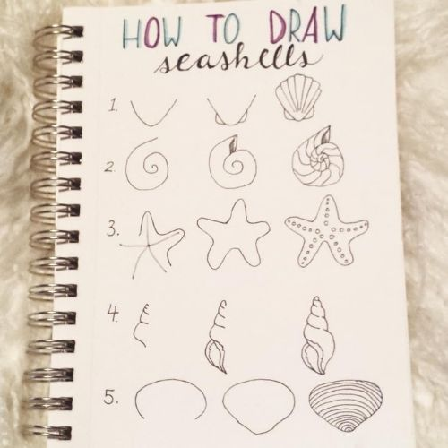 Seashell Step By Step Doodles